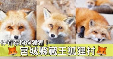 超療癒的近距離接觸!宮城藏王狐狸村~唔同品種嘅狐狸都有齊!