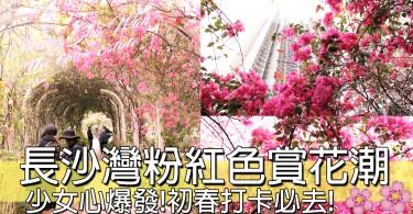 春天來了!長沙灣30米長粉紅色隧道賞花潮!要睇就要快!