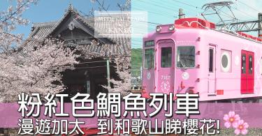 日本和歌山粉紅色鯛魚列車,少女心爆滿~~坐住去睇櫻花超幸福~~