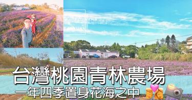 台灣桃園青林農場,置身於花海之中,一年四季都可以賞花,仲可以親手做乾燥花~~