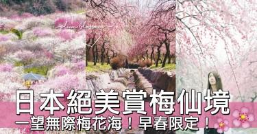多達100種類的絕美梅花海!日本三重縣絕美粉色梅花仙境~等不到賞櫻也絕對沒關係!