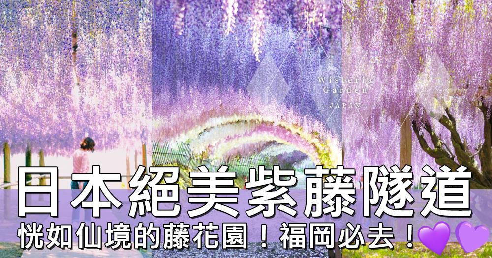 夢幻的粉紫美景!日本福岡絕美紫藤花園~如仙境一般的景致令人無法相信是真的…