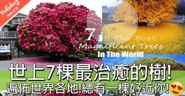 好想親眼睇一次!世上最治癒的7棵樹!最老的已經有1400歲~