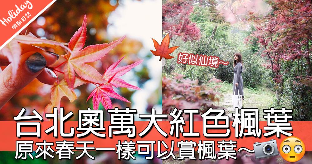 台北就可以賞楓葉!台北奧萬大春天一樣可以賞楓,一大面紅色楓葉畫面~~~