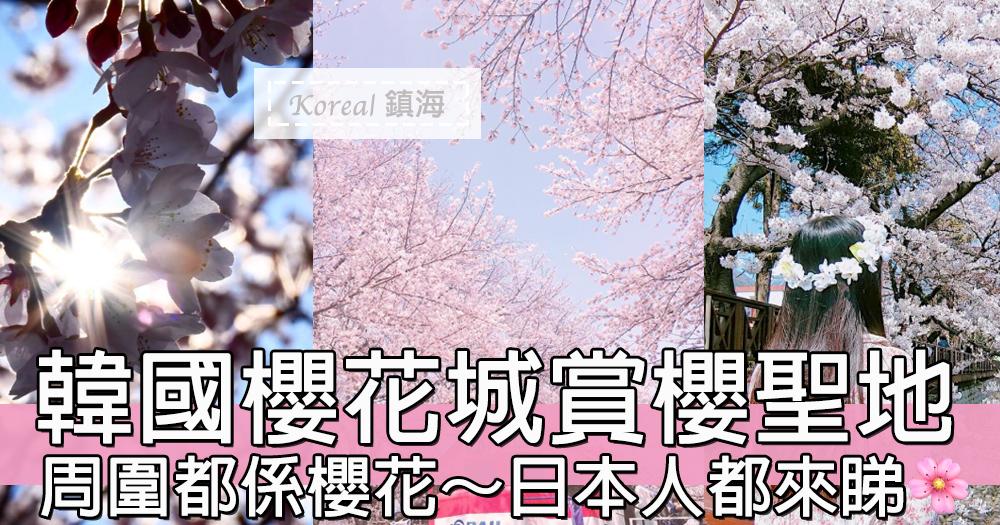 韓國櫻花城~周圍都係櫻花!韓國鎮海賞櫻聖地~連日本人都要過來睇!