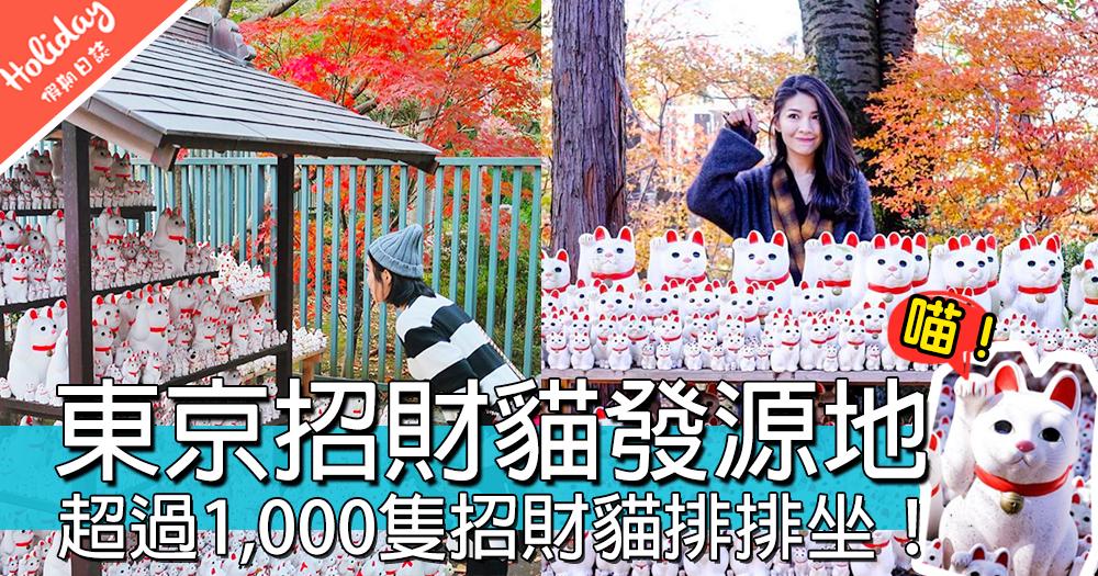 東京豪德寺招財貓發源地!超過1,000隻招財貓排排坐,多到有密集恐懼症呀~