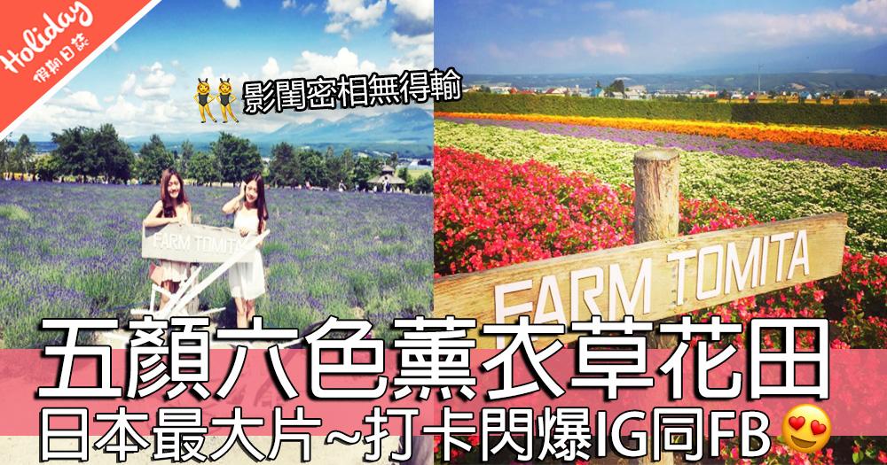 6至8月時間限定~北海道超靚薰衣草!紫色控必到之地~