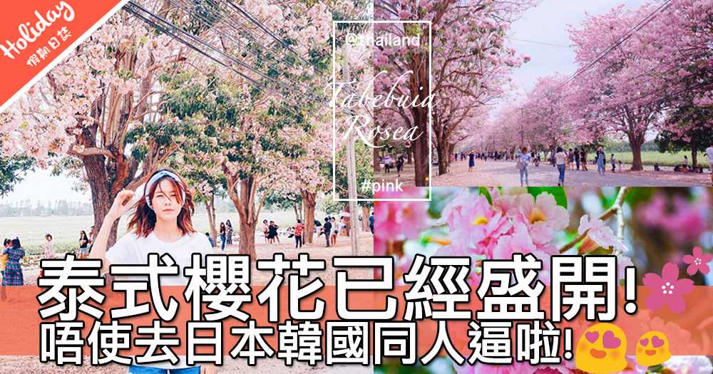 唔使去日本韓國啦!超夢幻極吸睛泰式櫻花已經盛開~快啲一齊去賞花啦!