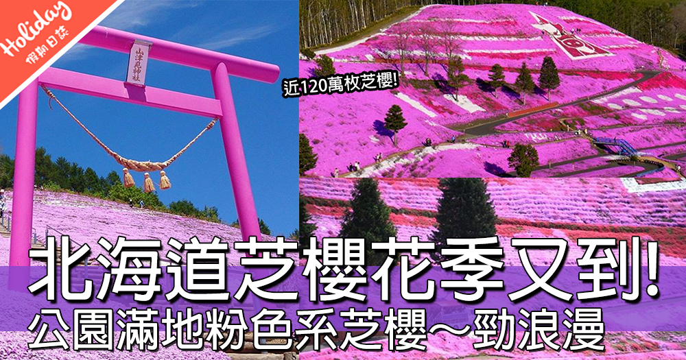 櫻花季完咗有乜野睇?北海道仙氣芝櫻公園,粉紅色花海佈滿成個山頭~