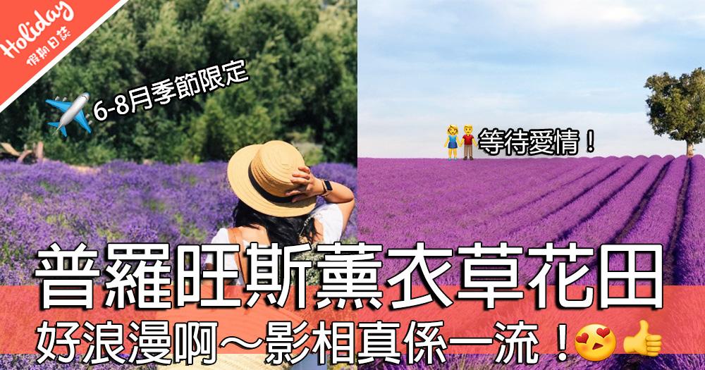超靚啊!法國普羅旺斯薰衣草田~又係IG/FB打卡嘅時候啦~