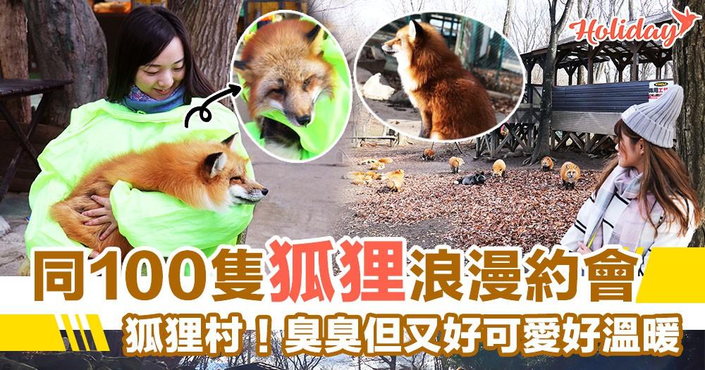 同100隻狐狸約會~宮城藏王狐狸村!臭臭但又好可愛好溫暖~