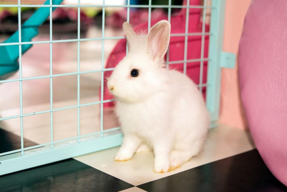 Seoul Bunny Cafe