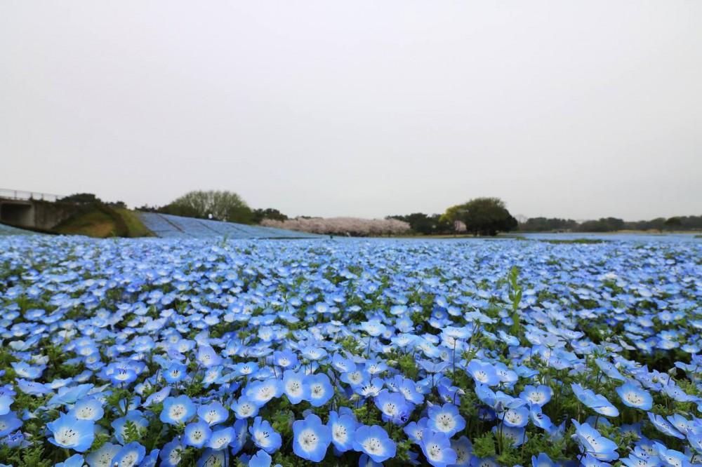 海の中道海浜公園Facebook