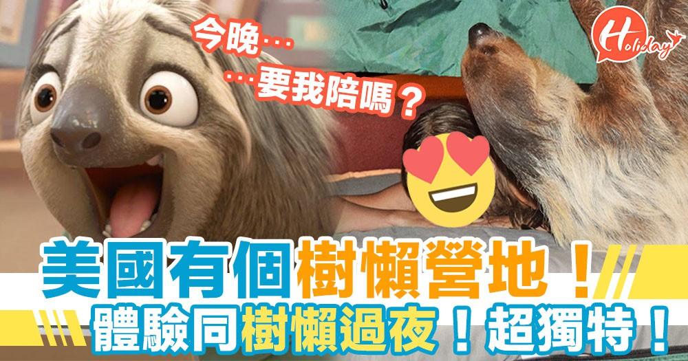 另類宿營體驗!美國「樹懶營地」可以同樹懶過夜?