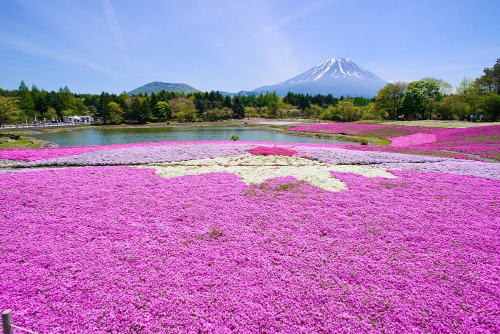 富士芝桜まつり事務局