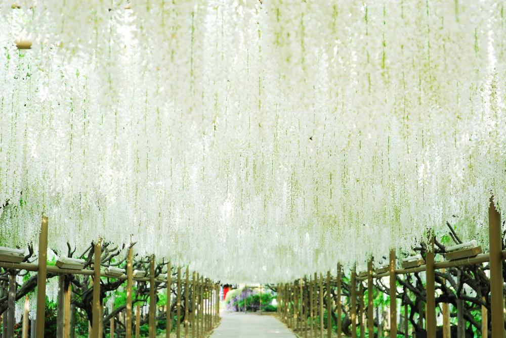 足利花卉公園官網