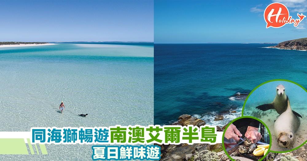 去南澳艾爾半島可以同海獅一齊游水,狂食新鮮海鮮,展開別開生面嘅生態之旅~