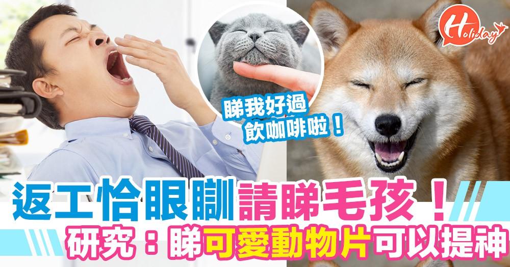 日本研究發現:睇可愛動物影片可以提神!返工恰眼瞓時請盡情睇毛孩!