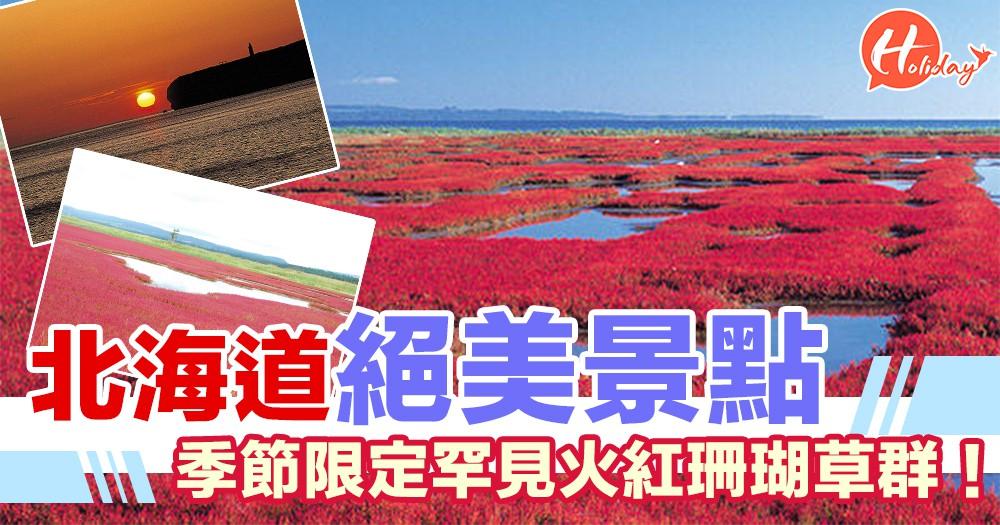 珊瑚草群落地!北海道能取湖上一片紅