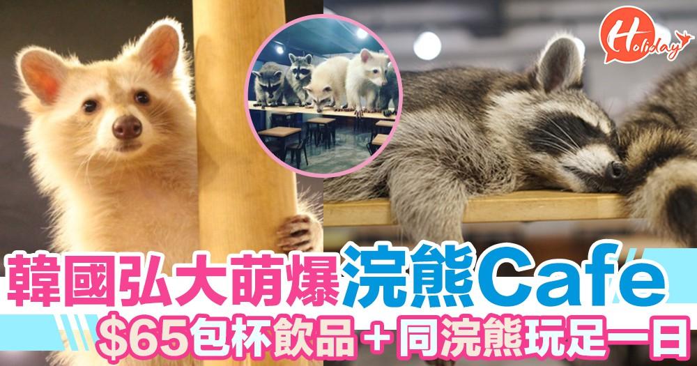 韓國弘大人氣浣熊Cafe $65就可以同浣熊玩足一日仲包一杯嘢飲