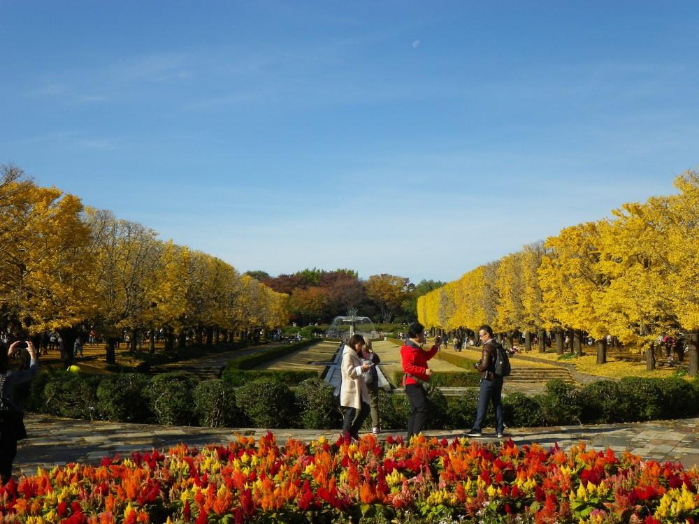 国営昭和記念公園 facebook