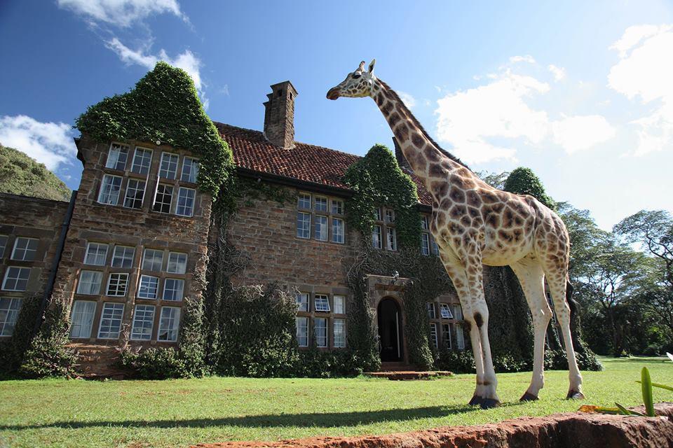 Giraffe Manor Facebook
