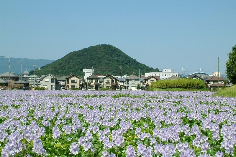奈良觀光局