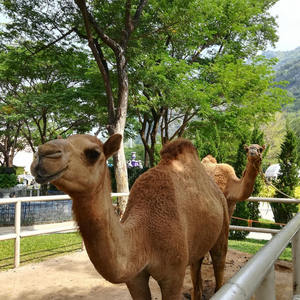 Camel Republic@FB